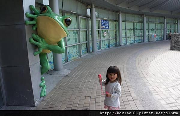 2012-03-05 第二次來動物園~青蛙