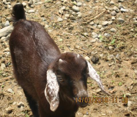 2010-03-14 花開了小羊羊.JPG