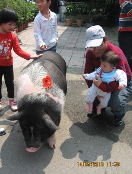 2010-03-14 花開了愛漂亮的豬媽媽.JPG