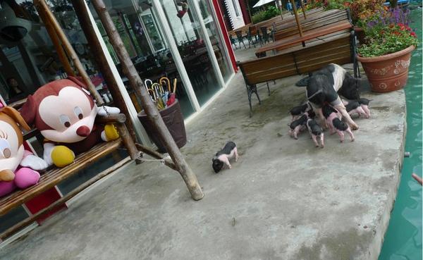 2010-12-05 豬媽媽真是走不及I.JPG