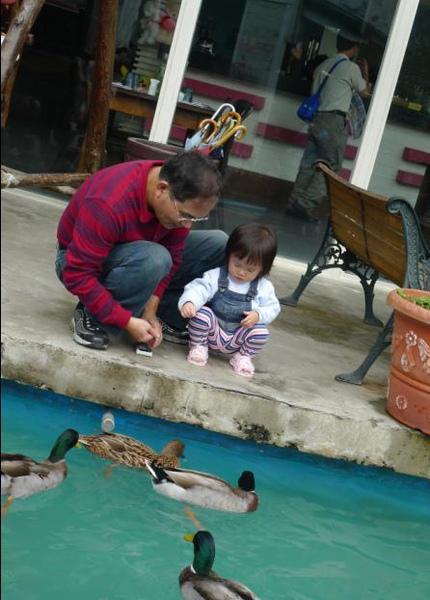 2010-12-05 來企餵鴨鴨嚕I.JPG
