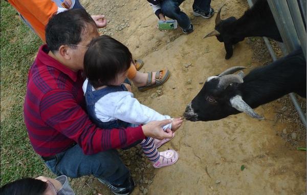 2010-12-05 沛沛餵羊咩咩II.JPG