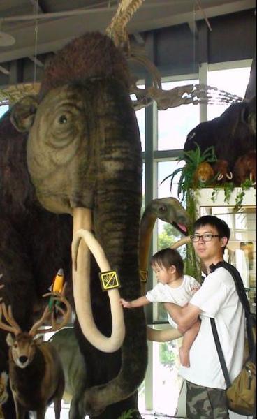2010-08-22 小沛沛摸摸長牙象.JPG