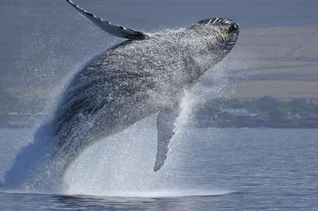 賞鯨2.jpg