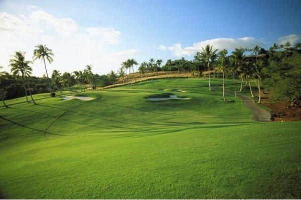 高爾夫11