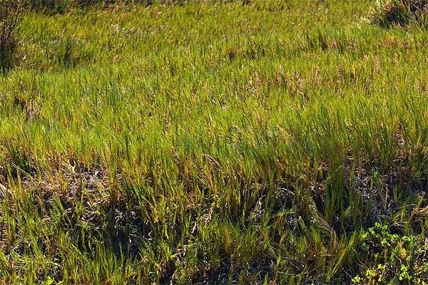 03_Grasses
