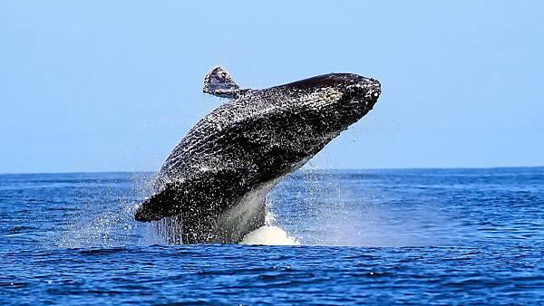 humpback-whale-1920x1080