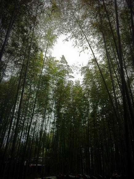 嵐山14.jpg