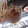 03 南國風味的河豚