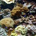 04 珊瑚館