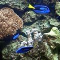 05 珊瑚館