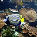 06 珊瑚館