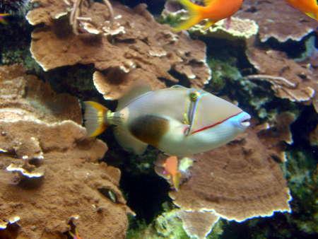 07 珊瑚館