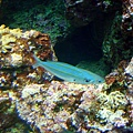 08 珊瑚館