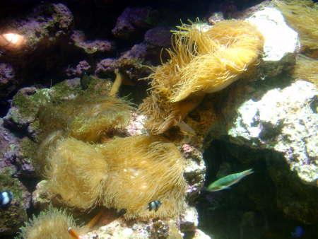 19 海葵