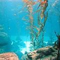 24 海藻缸