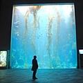25 海藻缸