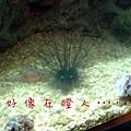 20 海膽