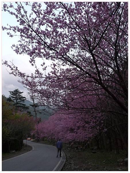 20160228_48_武陵.JPG