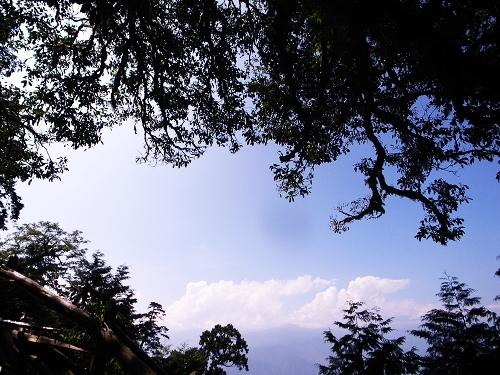 078密林一抹藍.jpg