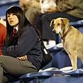 花絮-專注看球賽的女人與狗.jpg