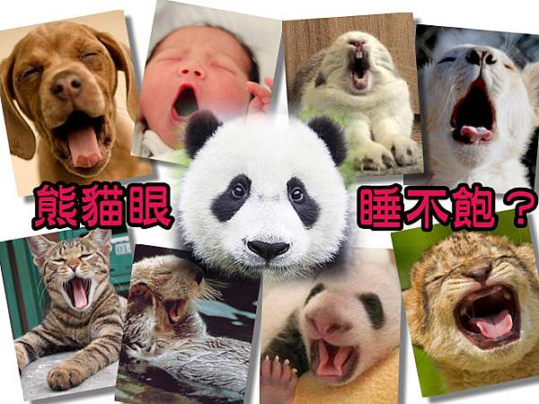 熊貓眼 睡不飽