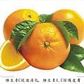 圖柳橙有字.jpg