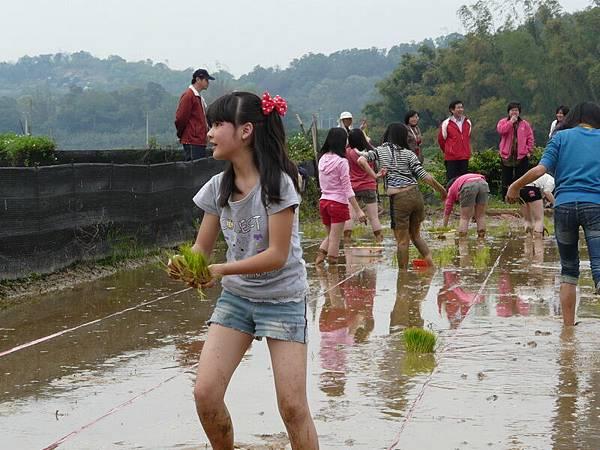 峨小插秧2008