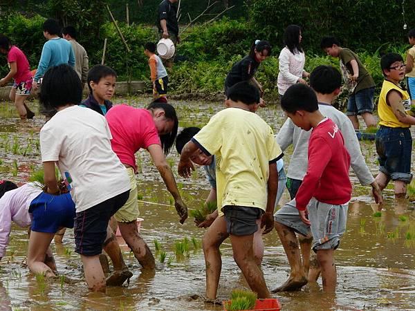 峨小插秧2009