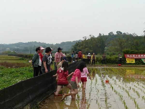 峨小插秧2010