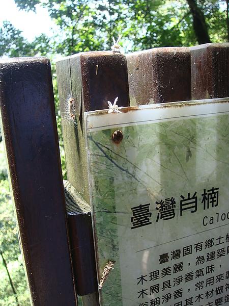 以為是白花的昆蟲.JPG