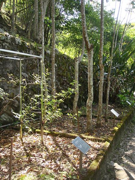 植物標本區.JPG