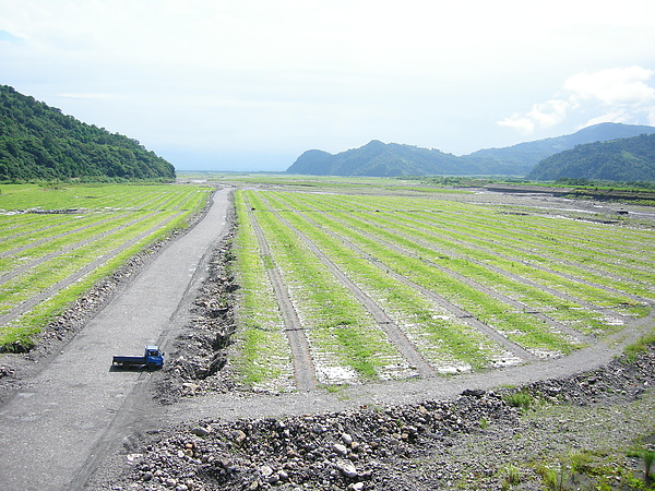 橋下的西瓜田.JPG