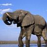大象001.jpg