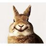 兔001.jpg
