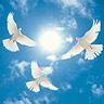 白鴿001.jpg