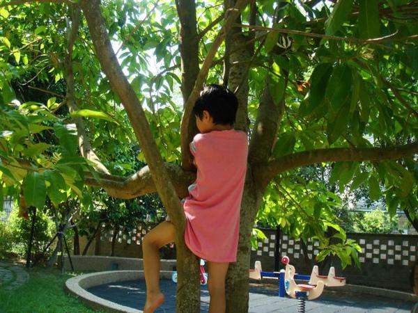 爬樹005.jpg