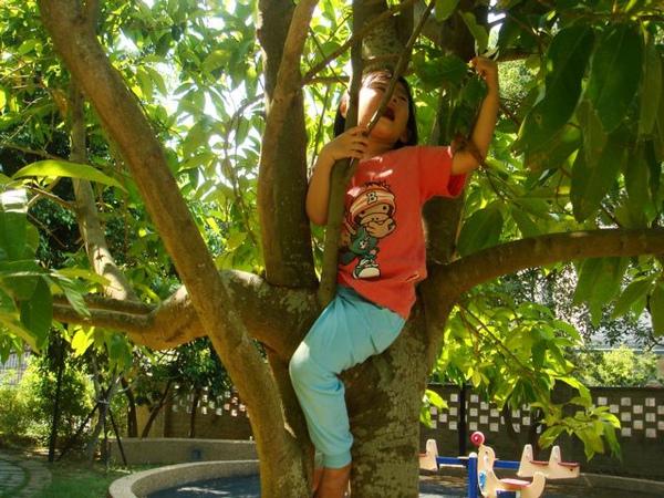 爬樹001.jpg