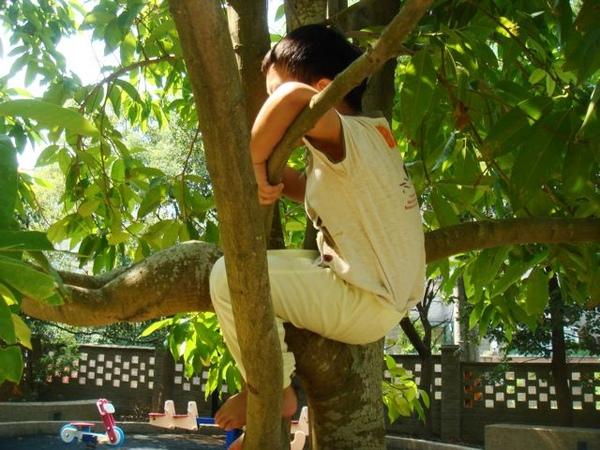 爬樹002.jpg