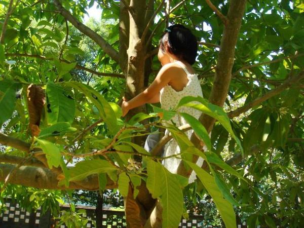 爬樹003.jpg