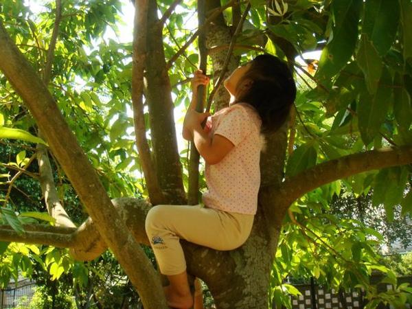 爬樹004.jpg