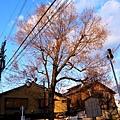 20_Japan016.jpg
