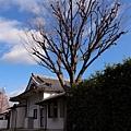 32_Japan002.jpg
