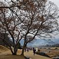 36_Japan019