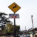 50_Japan034