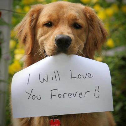 動物保護,牠們需要愛
