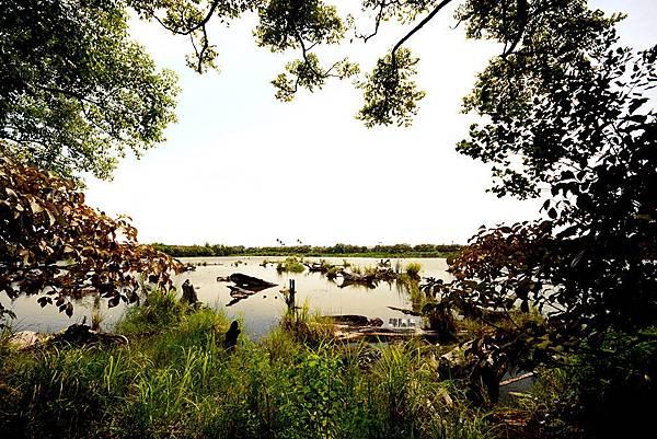 羅東林場儲木池