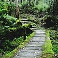 太平山,鐵杉林登山步道