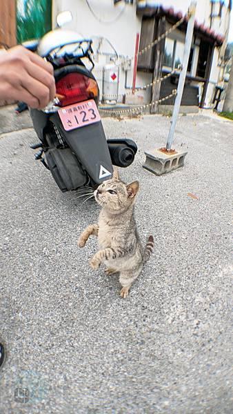 Okinawa_20181455.jpg
