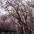 Tainan4212.jpg